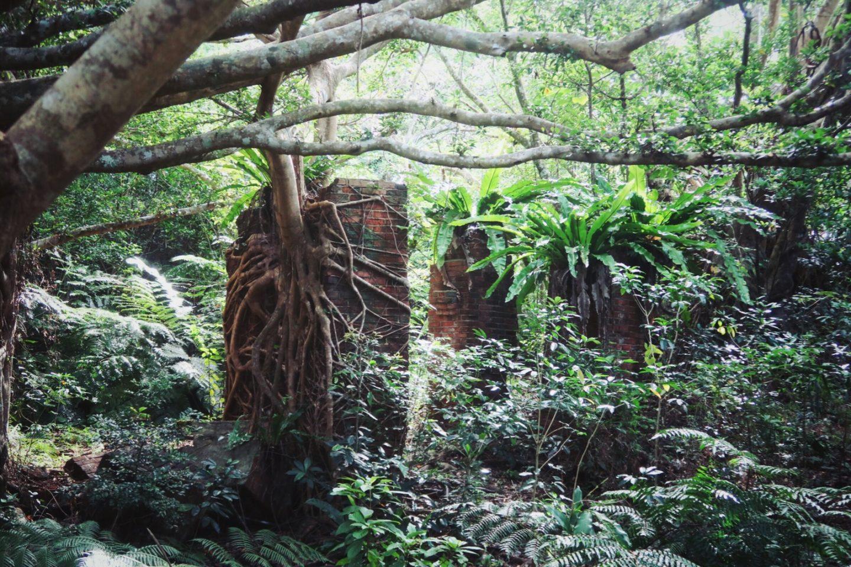 Insel Iriomote – Wanderungen durch den subtropischen Urwald