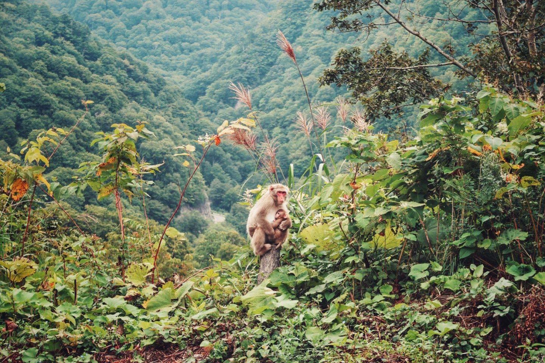 Shirakami-Sanchi – Radtour durch Japan Teil 8